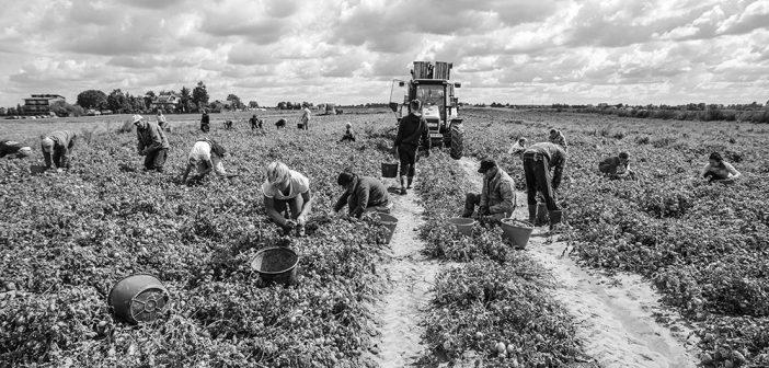 Caporalato in agricoltura