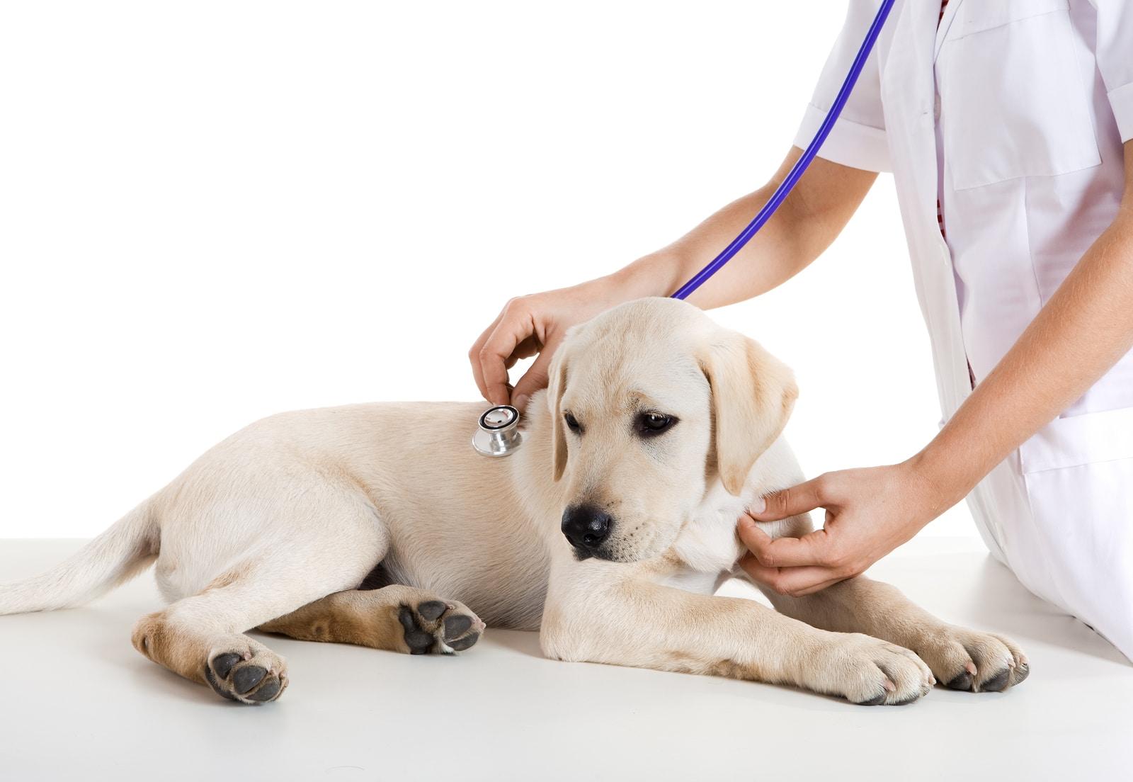 Permessi Retribuiti Per La Cura Di Animali Domestici Novità In