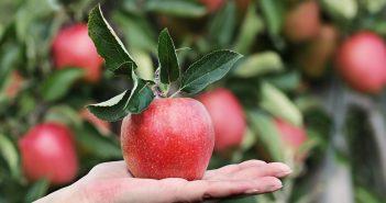Esonero contributi agricoli