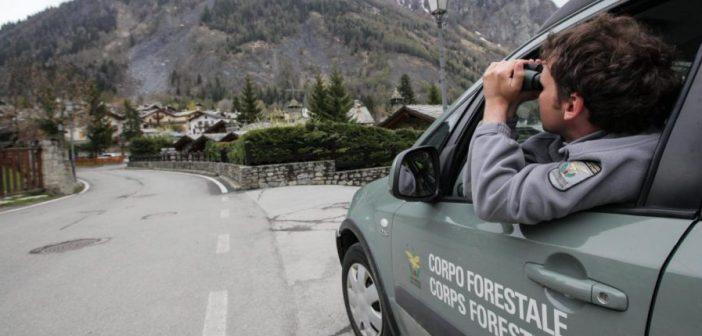 Concorso Guardia Forestale: 30 posti nella provincia di Trento