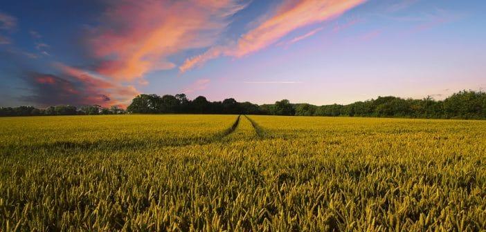 NASpI, cumulabilità con redditi da lavoro autonomo in agricoltura