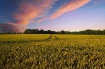 dmag agricoltura