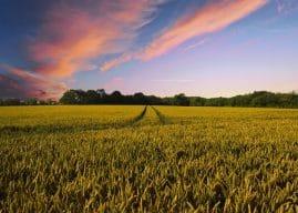 Dmag agricoltura: differita la scadenza del secondo trimestre 2019