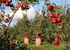 Esonero contributivo agricoltura post-Covid: indicazioni INPS