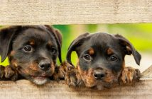 Detrazioni spese veterinarie